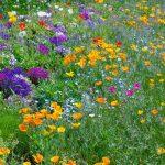 いつかは多くの花を咲かせ人々の心を潤すようになる  (2-2) 第 221 号