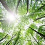 小さな自然に触れて宇宙からのエネルギーを受け取る  第 665 号